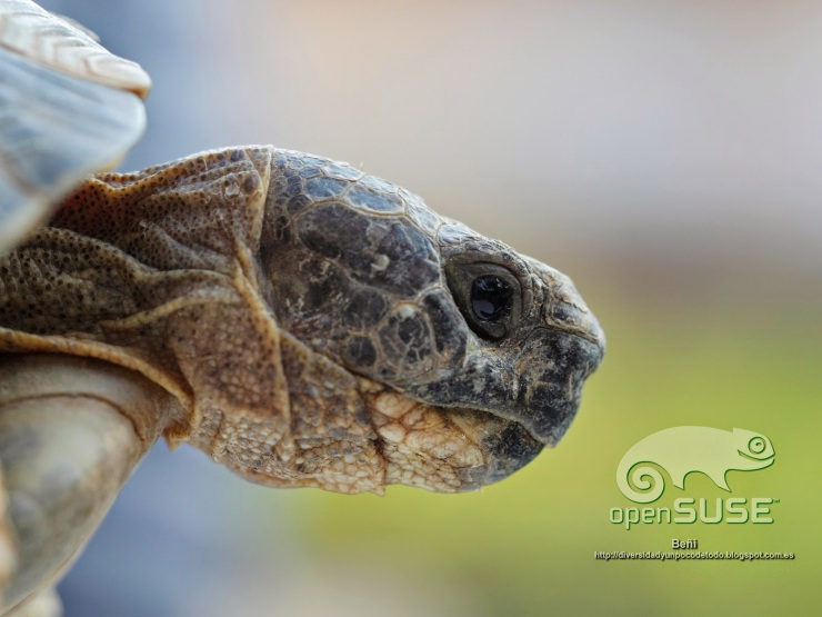 opensuse-tortuga-mora-43